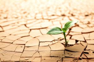 cracked_soil_plant