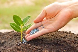 fertilizing_plant